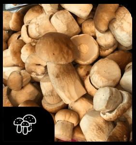 Champignons-produits-primeur-liege